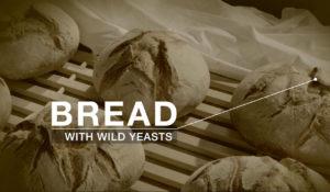 Wild Yeast 01 (Wilde Hefen)